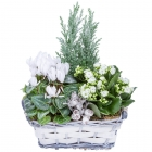 Frosty Flower Basket
