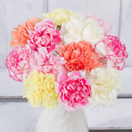 12 stems of long-lasting single Carnations in mixed colours. Guaranteed to last two weeks.
