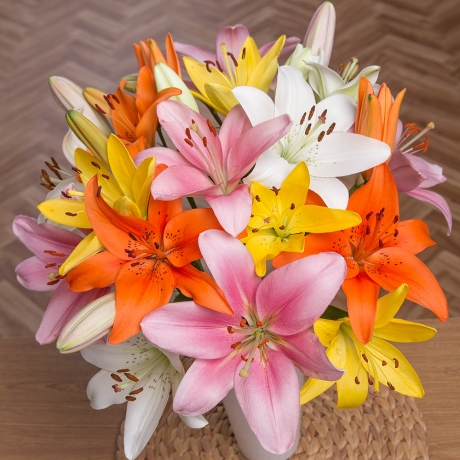A fabulous bouquet featuring nine stems of beautiful Asiatic Lilies in colours of orange, yellow, white and pink.<br /><br />Each Asiatic Lily stem has at least 3 Lily heads, giving a great value bouquet of at least 27 flowering lily heads.<br /><br />Please be aware that Lilies can be toxic to cats.