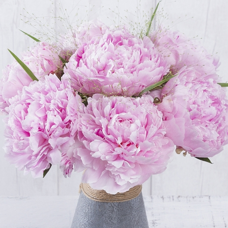 A simply stunning bouquet of pretty pink Peonies accompanied by stems of Panicum grass which will look wonderful displayed in the home.<br /><br />This gorgeous arrangement will make the perfect gift to send to someone special this summer.<br /><br />Please note that Peonies are a seasonal flower and are only available for a limited time.