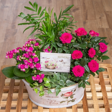 A selection of plants feature in this gorgeous vintage flower planter.<br /> <br />Containing Rose, Kalanchoe, Ivy and Mini Palm plants along with a vintage stamp pick, it makes the perfect gift.