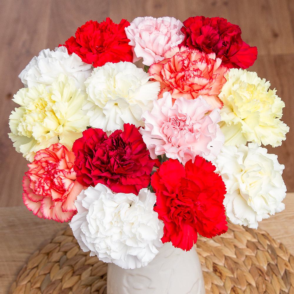 A beautiful selection of 14 long-lasting single Carnations in colours of white, yellow, orange, red and pink.<br /><br />We guarantee our Carnations will last for at least two weeks and we send our Carnations in bud to ensure maximum vase life.