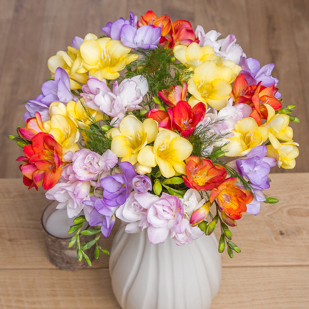 Send someone special the sweet-smelling fragrance of 20 long-stemmed Dutch Freesia in beautiful mixed colours .<br /><br />Freesias are one of the UK's favourite cut flowers due to their unique funnel shaped flowers and floral perfume.<br /><br />Bunches Freesias are sent in bud, so the recipient can enjoy the delicate blooms releasing their sweet fragrance as the flowers open up at home.