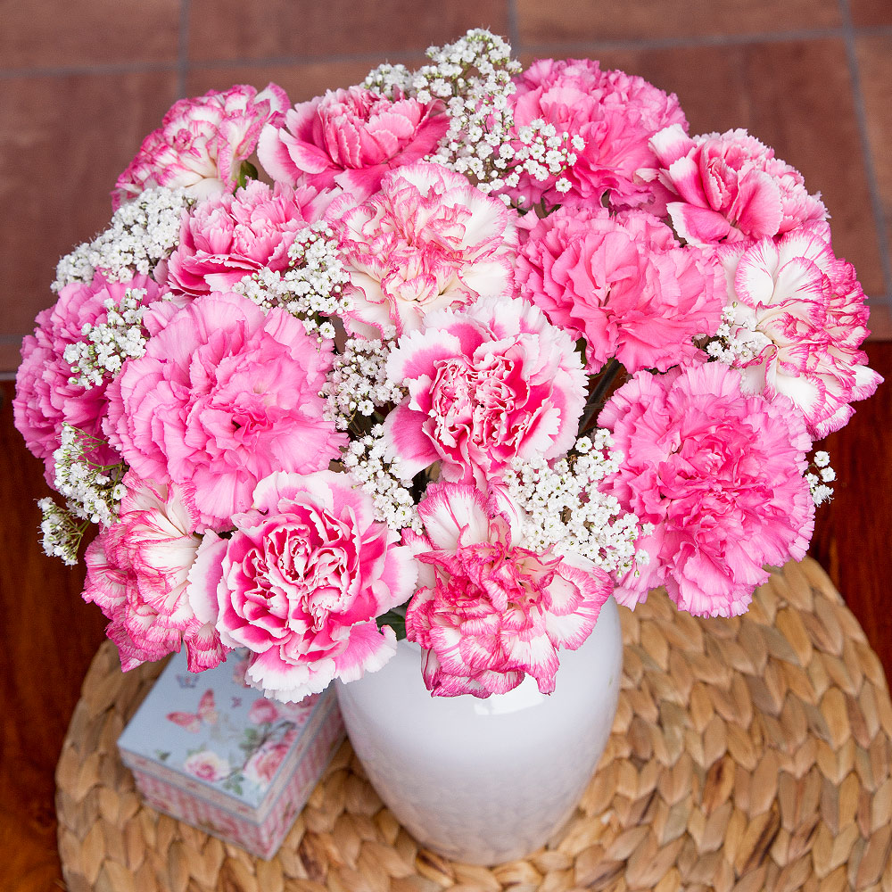 A wonderful, long-lasting bouquet featuring 15 single stem Carnations in pastel shades of pink and white, complemented by delicate white Gypsophila.<br /><br />We choose the strongest Carnations in terms of length of life from the best growing area for them in the world.