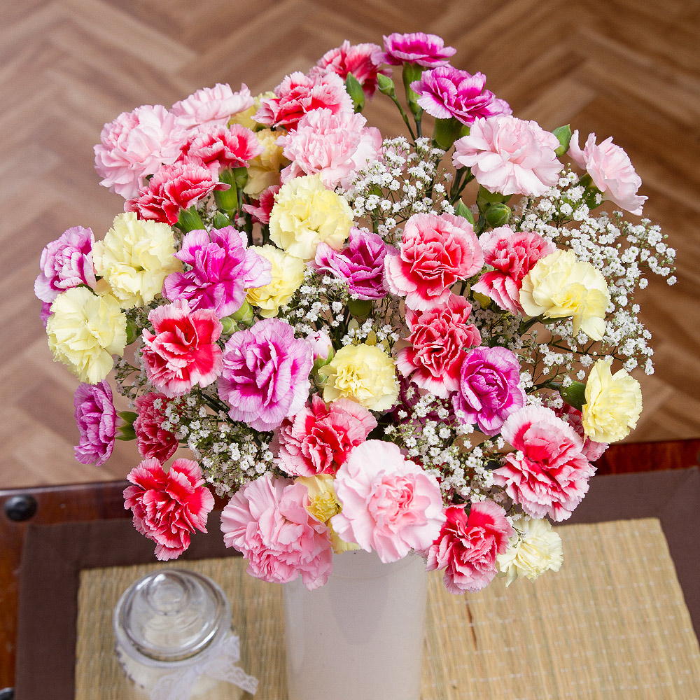A pretty bouquet of 14 delicate spray Carnations in colourful shades alongside delicate white Gypsophila.<br /><br />Each Carnation stem has at least 4 blooms so 14 stems will give around 56 flowering heads!