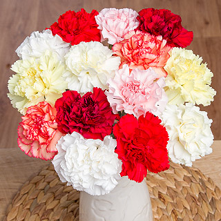 14 Classic Carnations with Gypsophila