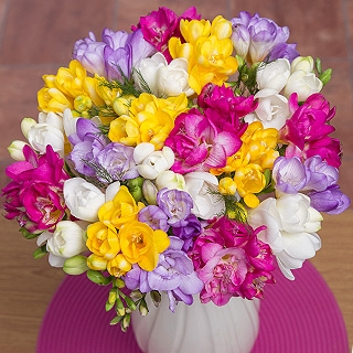 30 Fragrant Freesias