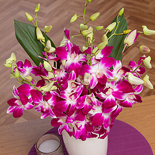 Oriental Orchids