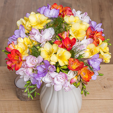 Fragrant Freesias